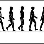 フルパワーウォーキング:歩行のメカニズム